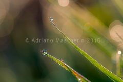 Rugiada sull'erba - Dew on the grass