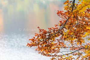 Foglie autunnali... -  Fall leaves