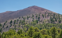 Trees repopulate the volcano- Sunset Crater NM